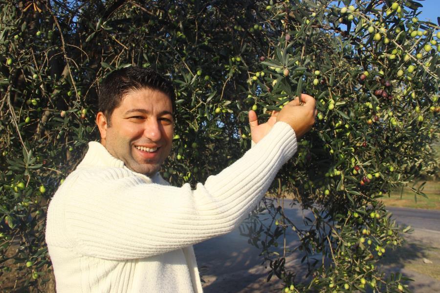Erken hasat zeytinyağı şifa kaynağı