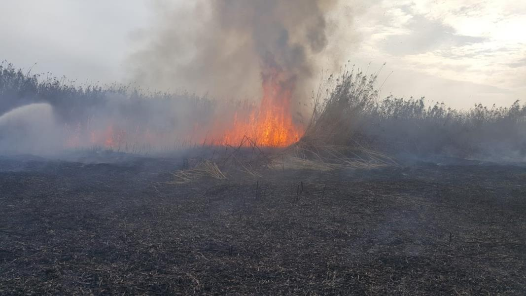 Kuşların göç yolunda sazlık yangını