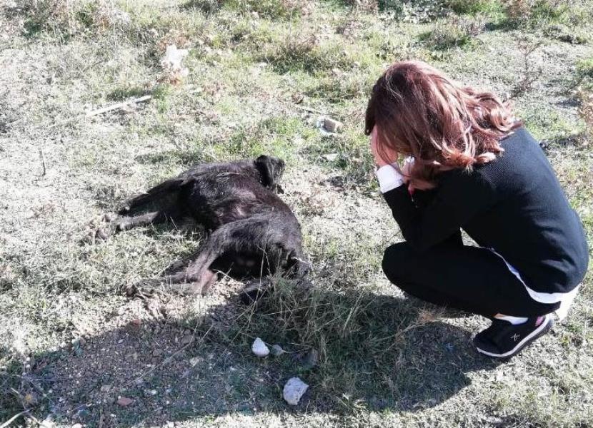 Ağıla girdi dedi köpeği öldürdü