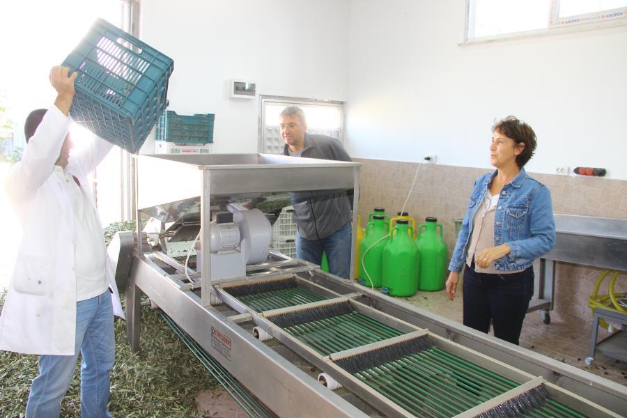 Emekli çift zeytin yağı üretmek için üniversite okuyor