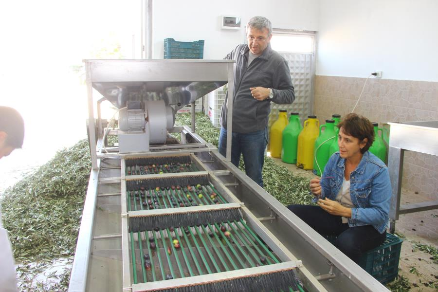 Zeytin yağı üretmek için üniversite okuyorlar
