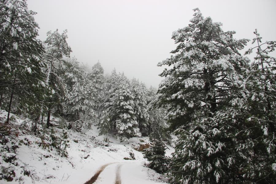 Kazdağlarının eşsiz kar manzaraları