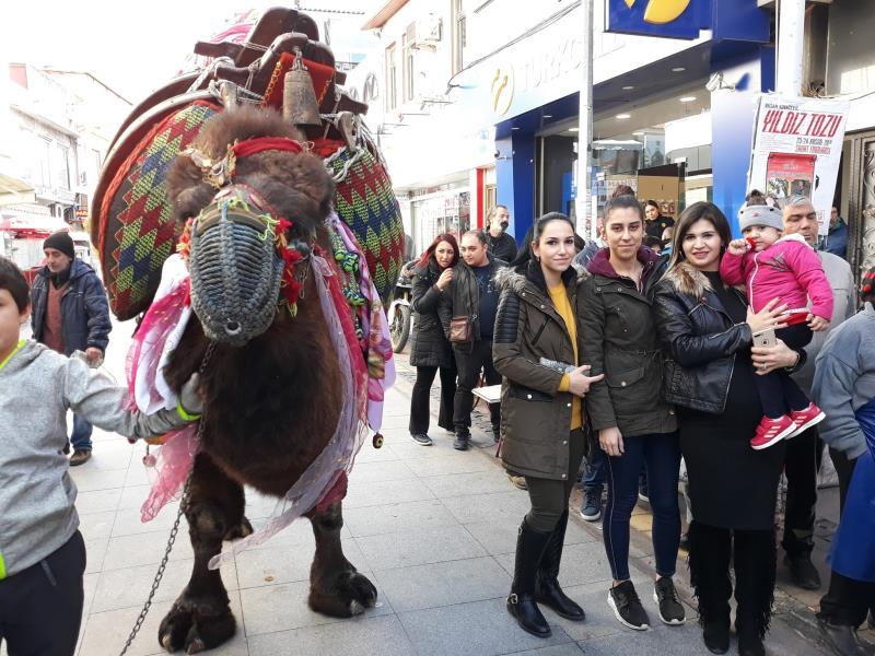 Ege ve Marmara'nın en güçlü develeri Ayvalık'ta yarışacak