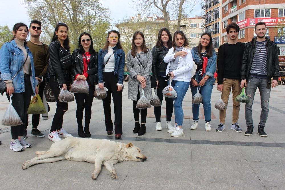 Üniversite öğrencileri sokak hayvanlarını unutmadı