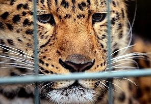Ulusal parkta leopar dehşeti 1 ölü