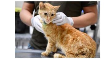 Enkazdan çıkarılan kediler tedavi altına alındı
