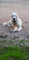 Manyas ta kedi ile köpek dostluğu