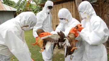 Japonya'da kuş gribi salgını endişesi büyüyor