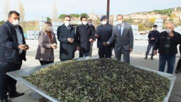 50 yıllık zeytinyağı fabrikası hibe desteğiyle yenilendi