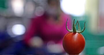 Rusya domates ve biber ihracatını durdurdu, ihracatçı tepkili