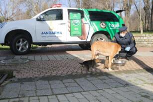 Jandarma ekipleri sokak hayvanlarını besliyor