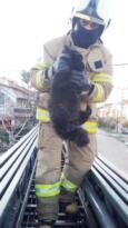 Telefon direğinde mahsur kalan kediyi itfaiye kurtardı