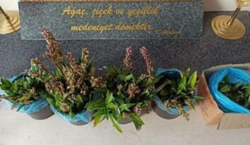 Orkide toplayan iki kişiye 160 bin 930 lira ceza kesildi